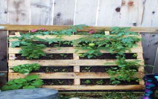 Make Your Own Hanging Garden.