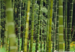 Bamboo – Not Getting Eco-Friendly