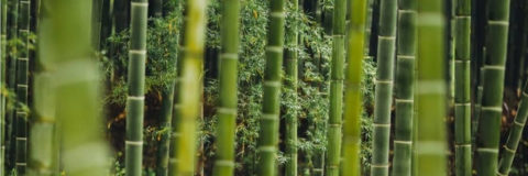 Bamboo - Not Getting Eco-Friendly