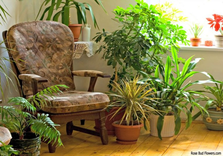 Going Green on Household Furniture